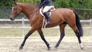 Being Mindful and In the Moment: Training Horses and Living Your Life