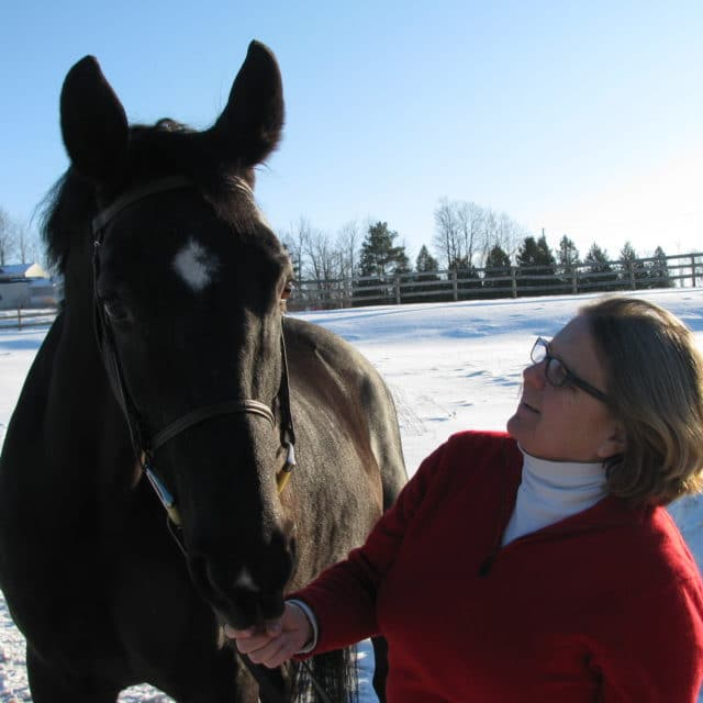 Finding the Right Equine Career